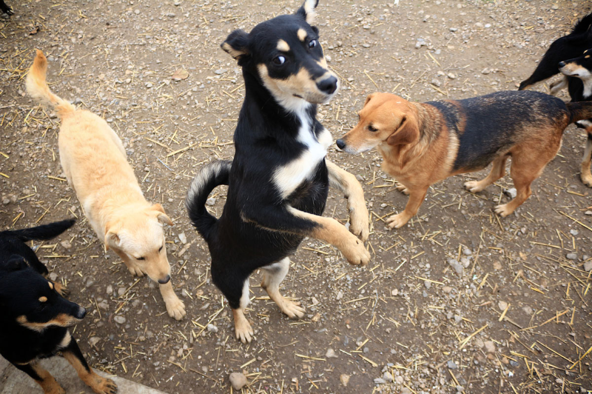 "isuzu donacija azil za pse ""bella"""